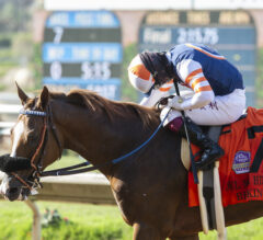 Hollywood Turf Cup Preview: Red King Returns Home
