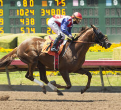 Best Pal Preview: Schnell Ready To Knock Heads At Stakes Level