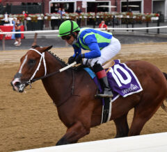 Champagne Preview: Jackie's Warrior Ready for Next Challenge