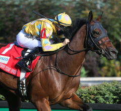 Diamond Oops Skims the Hedges to Win Twin Spires Turf Sprint