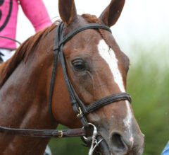 Franklin County Preview: Got Stormy Makes Final Breeders' Cup Prep