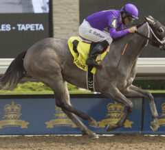 Mizzen Beau Clearly the Best in Bison City
