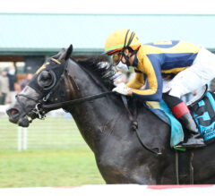 Outadore Seeks Third Stakes Win in Paradise Creek