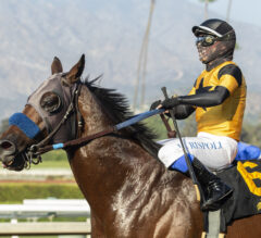 Cary Grant Preview: Galilean Could Continue Conquering Cal-Breds