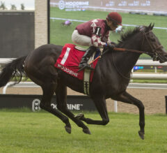 Proven Strategies Clear Winner in Toronto Cup