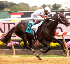 Yaupon Breezes in Chick Lang