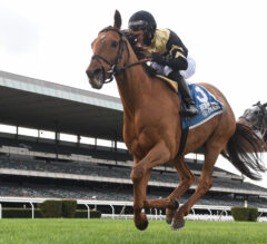 Devamani and Olympico complete Chad Brown-trained exacta in G2 Knickerbocker