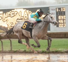 Notebook Preview: Blue Gator Favored in NY-Bred Showdown