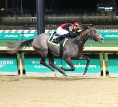 Suncoast Preview: Honorifique Could Relish Stretching Back Out