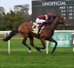 Hard Love Chases After First Stakes Score in Woodhaven