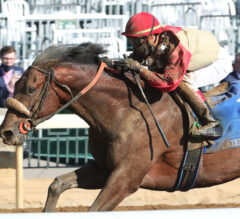 Rocketry Explods Late to Take TAA