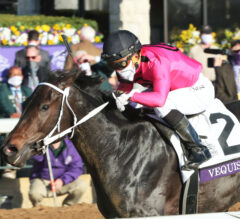 Champion Filly Vequist 'Happy and Sound' After Davona Dale Loss