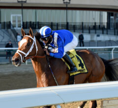 Demoiselle Preview: Who Has The Winning Pedigree?