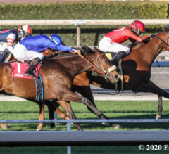 Quattroelle Conquers Blue Norther