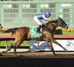 Varda Runs Off With Starlet