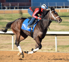Papa Dude's Saturday Stakes Picks: Oaklawn Park