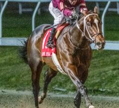 Kentucky Derby Contenders Pedigree Analysis: Midnight Bourbon