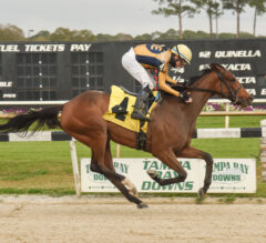 Curlin's Catch Proves Uncatchable in Suncoast