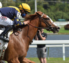 Penn Mile Preview: Annex Out To Avenge Defeat