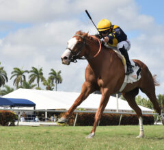 American Turf Attracts Evenly-Matched Field Including Annex, Scarlett Sky, Palazzi