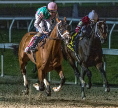 With Blinkers On, Mandaloun Takes Off In Risen Star