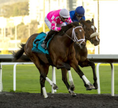 Rombauer Runs Last To First In El Camino Real Derby