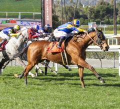 Brandothebartender Serves Up Victory In Sensational Star
