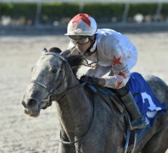Crazy Beautiful's Class Prevails In Gulfstream Park Oaks