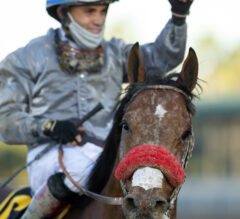 Learning From The Best In Horse Racing
