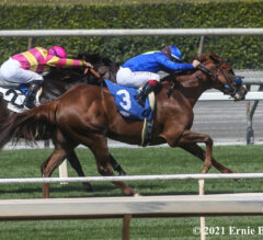 Constantia Rallies into Fast Pace to Take Mizdirection