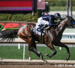 Crystal Ball Seeks To Keep Perfect Campaign Alive In Shuvee