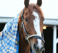 King Fury to Scratch from Kentucky Derby