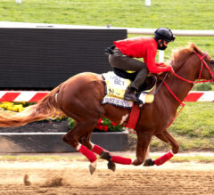 France Go de Ina Among Belmont Stakes Runners to Hit the Track