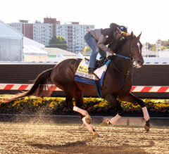 Racing Dudes 2021 Preakness Picks and Wagering Guide