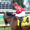 Multiple Graded Stakes Winner Sconsin Tops Roxelana