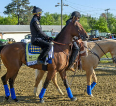 Preakness Stakes Live Odds, Black-Eyed Susan-Preakness Double Will Pays