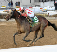 Brown Reroutes Risk Taking to Preakness Stakes