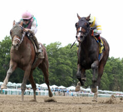 Racing Dudes 2021 Haskell Stakes Wagering Guide and Picks Presale