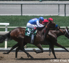 Nine Cal-Bred Youngsters Meet In CTBA