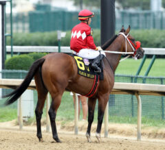 Letruska Leads Accomplished Field In Personal Ensign