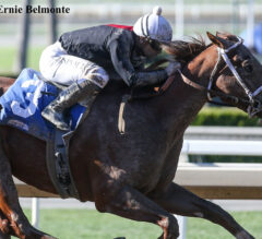 The Chosen Vron Successfully Stretches Out In Affirmed