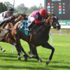 Runaway Rumour Returns To Graded Company In Sands Point