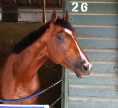 Mandaloun To Work Saturday For Haskell, Weather Permitting