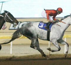 Welder To Attempt Most Wins In Remington Park History