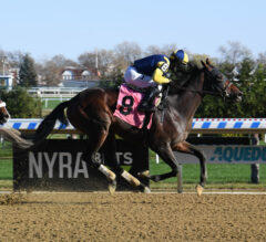 Wolfie's Dynaghost Set For Turf Debut In National Museum Of Racing Hall Of Fame