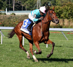Tamahere Romps In Violet
