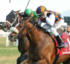 Imperador Rules Over All In Calumet Turf Cup