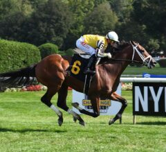 Annapolis Could Use Pilgrim As Prep For Breeders' Cup Juvenile Turf; Brown Saddles Pair Aiming For Third Straight Waya